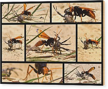 Wood Print featuring the photograph Wasp And His Kill by Miroslava Jurcik