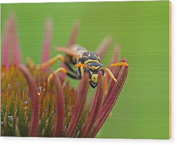 Wasp  Wood Print by Juergen Roth
