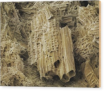 Wasp Nest Material (sem) Wood Print by Science Photo Library