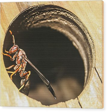 Wasp Wood Print by Steven  Taylor