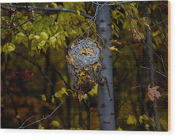 Wasp's Nest Wood Print by Jerome Lynch