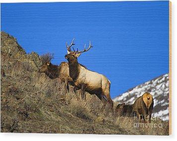 Watchful Bull Wood Print by Mike  Dawson
