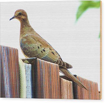 Watchful Dove Wood Print by Helen Carson