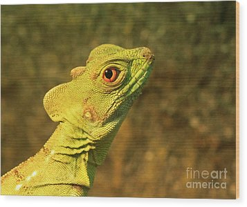 Watchful Eye Of The Green Basilisk Lizard  Wood Print by Inspired Nature Photography Fine Art Photography