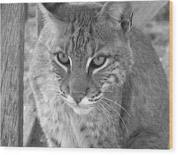 Watchful Eyes Black And White Wood Print by Jennifer  King