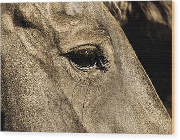 Watchful Eyes Wood Print