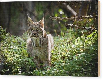 Watchful Mama Lynx Wood Print