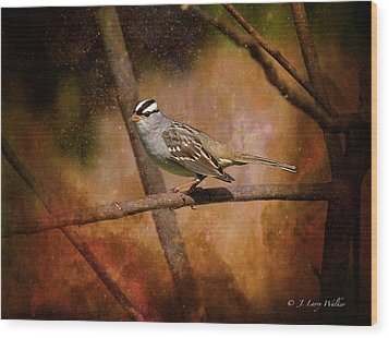 Watchful White-crowned Sparrow Wood Print