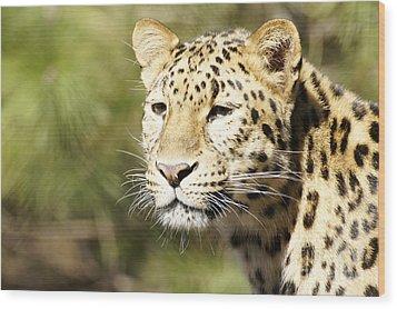 Watching Leopard Wood Print
