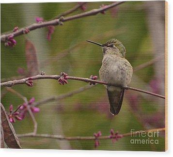 Watching Spring Arrive Wood Print