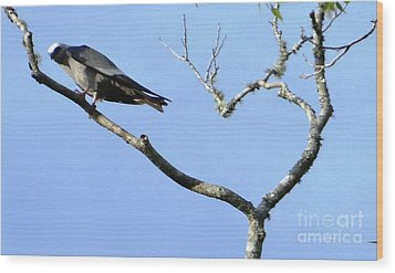 Wood Print featuring the photograph Watching You Like A Hawk by Ecinja Art Works