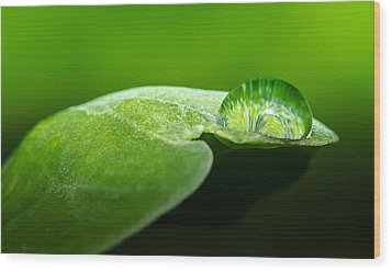 Water Drop Wood Print by Tin Lung Chao
