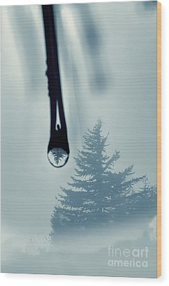 Water Drop With Tree Reflection Wood Print by Dan Friend
