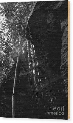 Water Drops After Storm Wood Print by Dan Friend