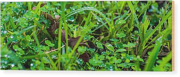 Water Drops On The  Grass 0052 Wood Print by Terrence Downing