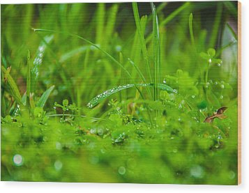 Water Drops On The  Grass 0084 Wood Print by Terrence Downing