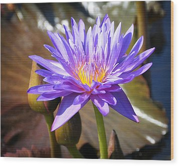 Wood Print featuring the photograph Water Flower 1004d by Marty Koch