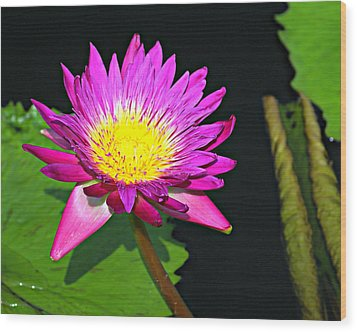 Wood Print featuring the photograph Water Flower 10089 by Marty Koch