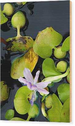 Wood Print featuring the photograph Water Flower by Allen Carroll