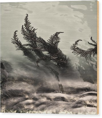 Water Fronds Wood Print by Dave Bowman