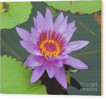 Water Lilies 005 Wood Print