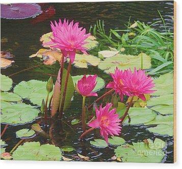Water Lilies 008 Wood Print by Robert ONeil