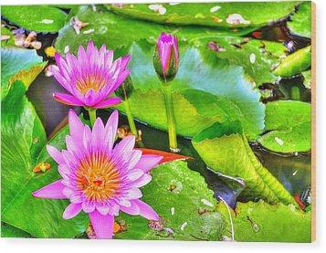 Water Lilies 2 Wood Print by Richard Zentner