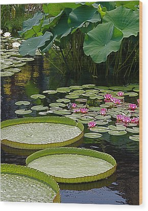 Wood Print featuring the photograph Water Lilies And Platters And Lotus Leaves by Byron Varvarigos
