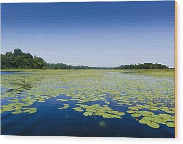 Water Lilies Wood Print by Gary Eason