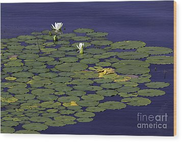 Wood Print featuring the photograph Water Lilies by Les Palenik