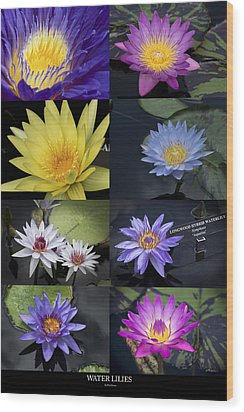 Water Lilies Wood Print by Phil Abrams