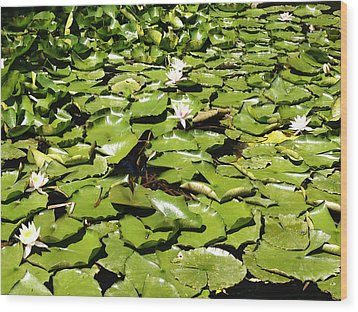 Water Lillies Wood Print by Les Cunliffe