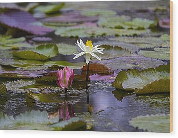 Water Lillies9 Wood Print by Charles Warren