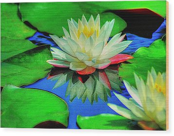 Water Lilly Wood Print by Ed Roberts