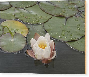 Wood Print featuring the photograph Water Lilly by Haleh Mahbod