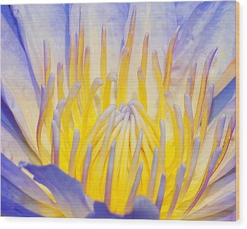 Water Lilly Wood Print by Robert Culver