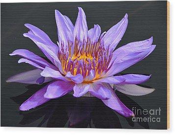 Water Lily - Aquarius Wood Print