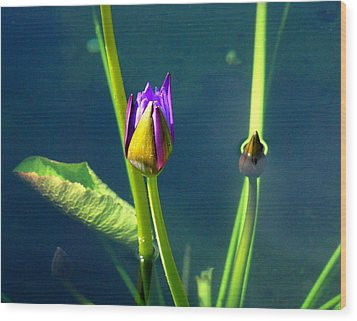 Water Lily 005 Wood Print