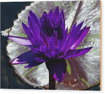 Water Lily 008 Wood Print