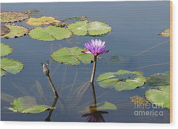 Water Lily And Dragon Fly One Wood Print by J Jaiam