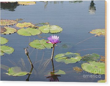 Water Lily And Dragon Fly Two Wood Print