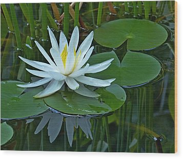 Water Lily And Reflection Wood Print
