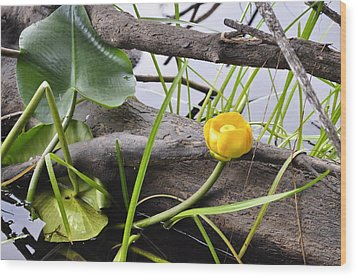 Wood Print featuring the photograph Water Lily by Cathy Mahnke