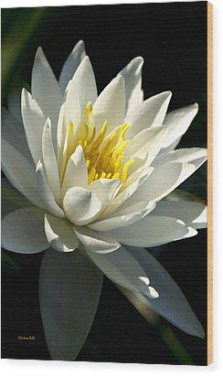 Water Lily Wood Print by Christina Rollo