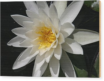 Water Lily  Wood Print by Denyse Duhaime