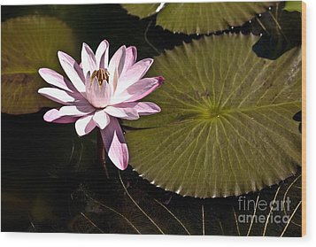 Water Lily Wood Print by Heiko Koehrer-Wagner