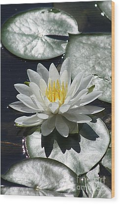 Wood Print featuring the photograph Water Lily II by Anita Oakley