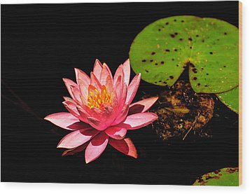 Wood Print featuring the photograph Water Lily by John Johnson