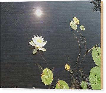 Water Lily Wood Print by Laurel Best