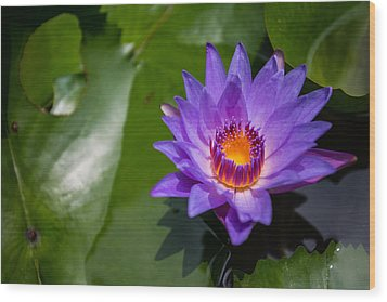 Water Lily Wood Print by Mike Lee